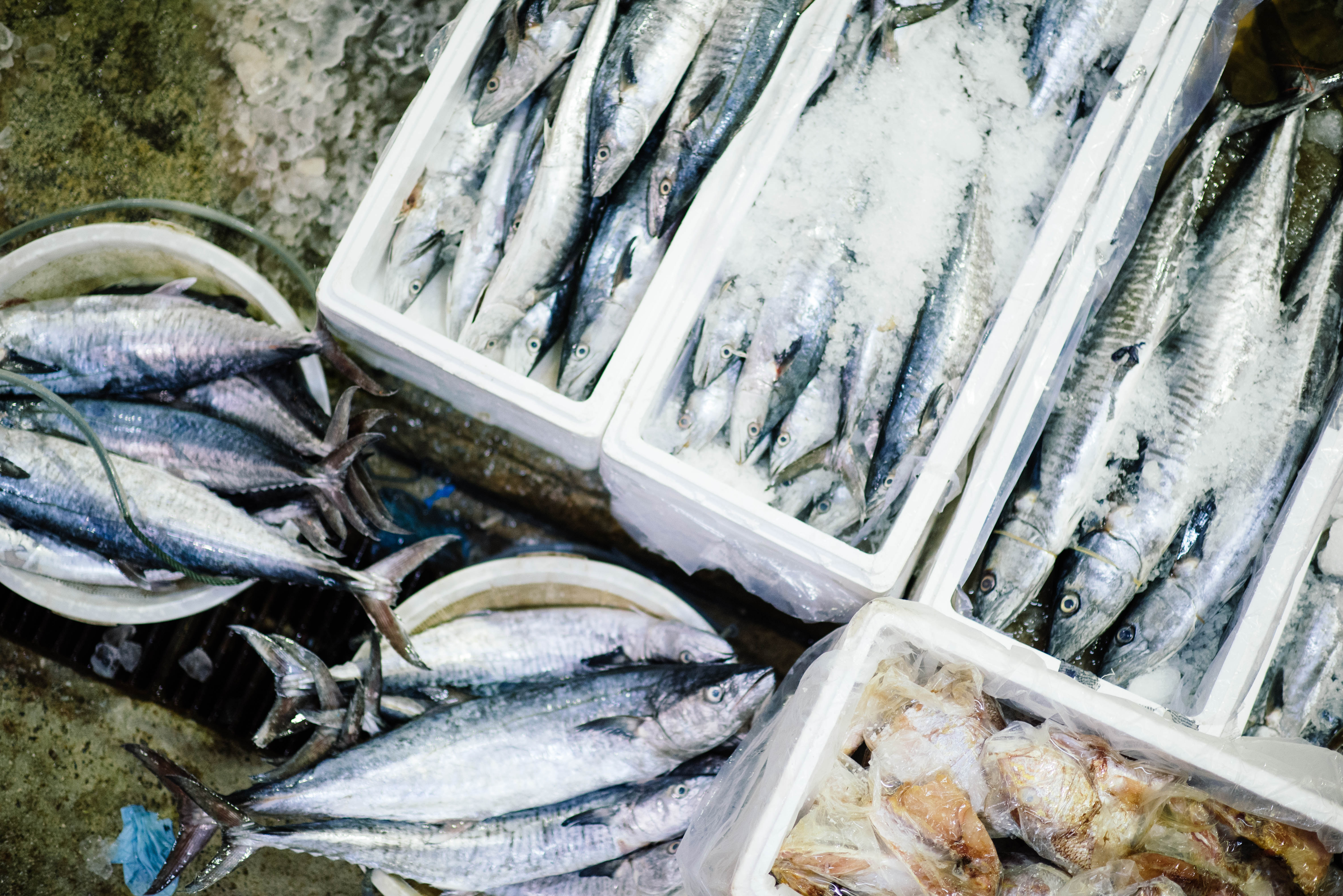 Comment acheter son poisson kaizen for Acheter poisson
