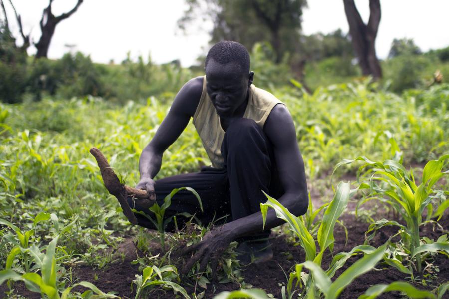 éthiopie agriculture