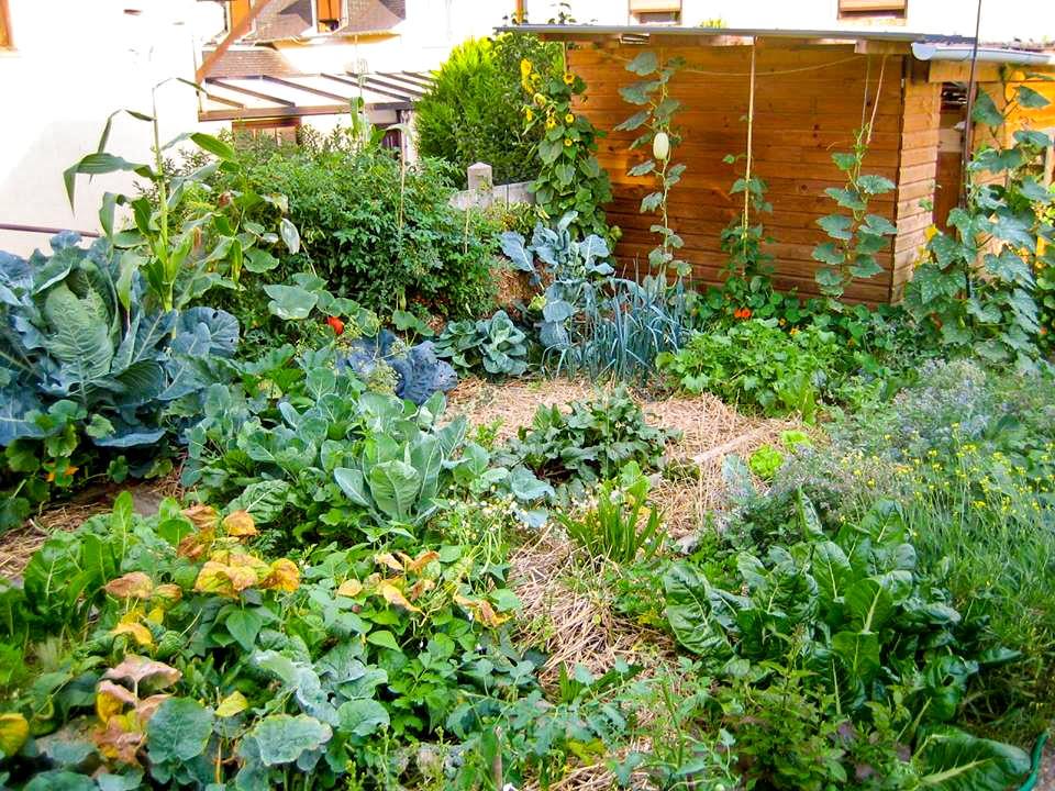 Permaculture le paillage pour r g n rer le sol de nos for Culture des jardins