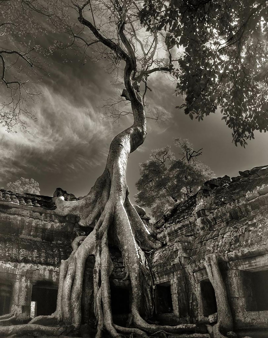 ancient-trees-beth-moon-17