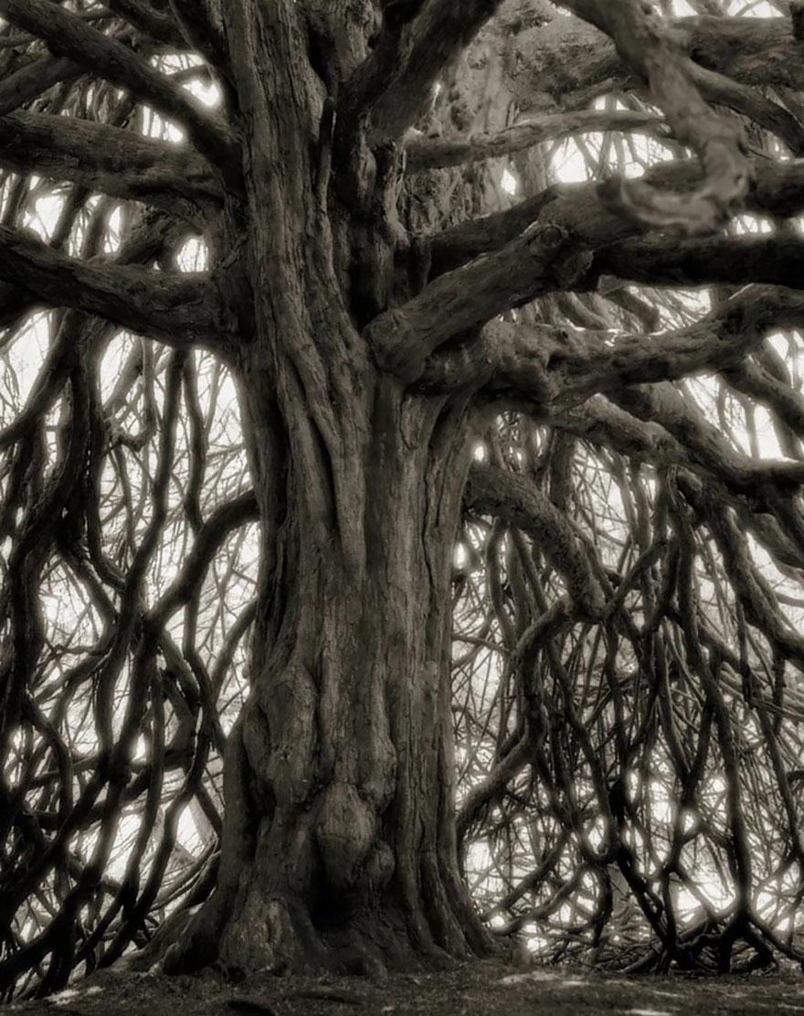 ancient-trees-beth-moon-18
